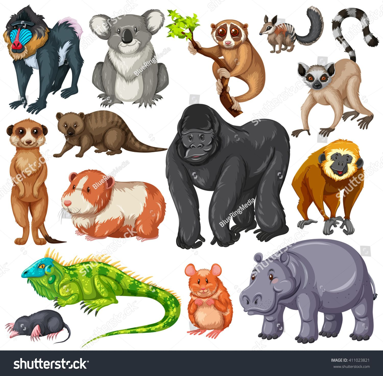 Different type of wildlife animals on white background ...