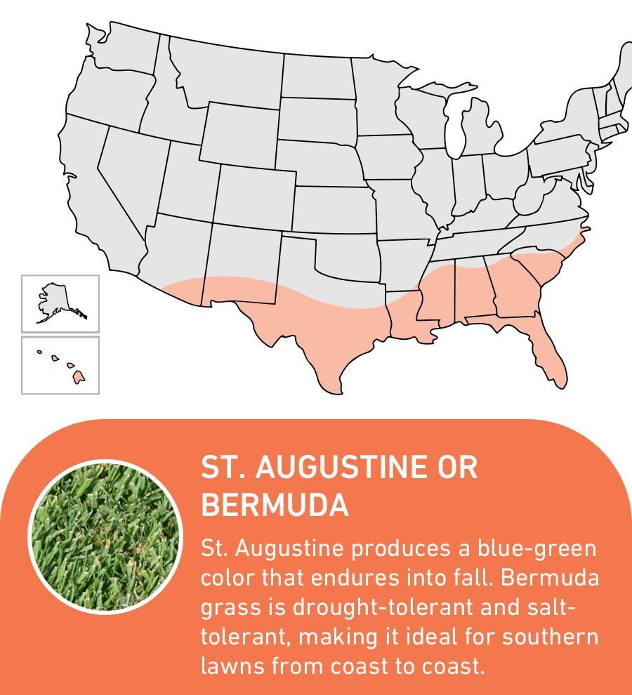 St Augustine And Bermuda Produce A Blue Green Color And Are Ideal