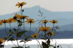 Wildflowers , Camel's Hump and Lake Champlain