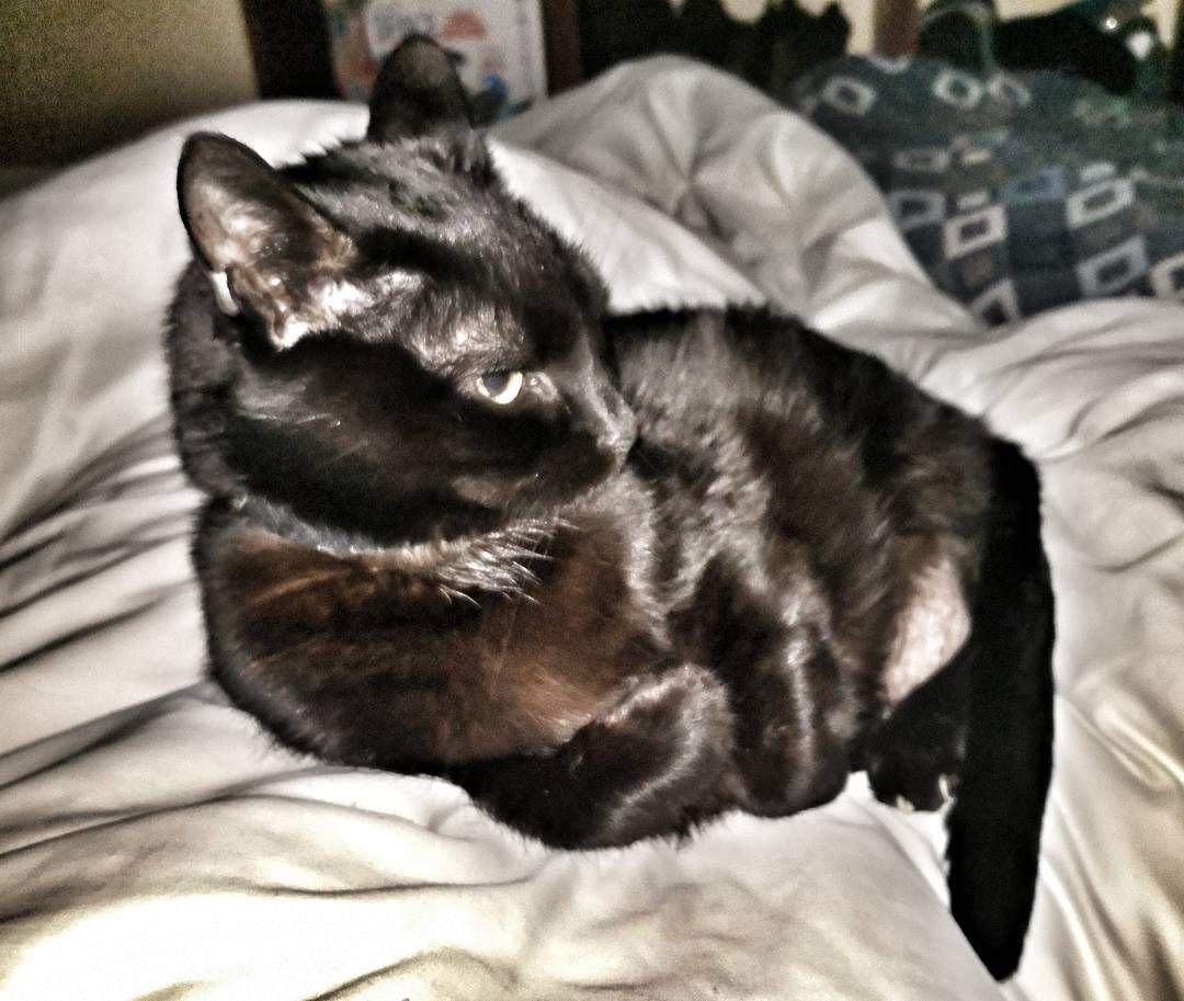 Pin On Chernyj Kot