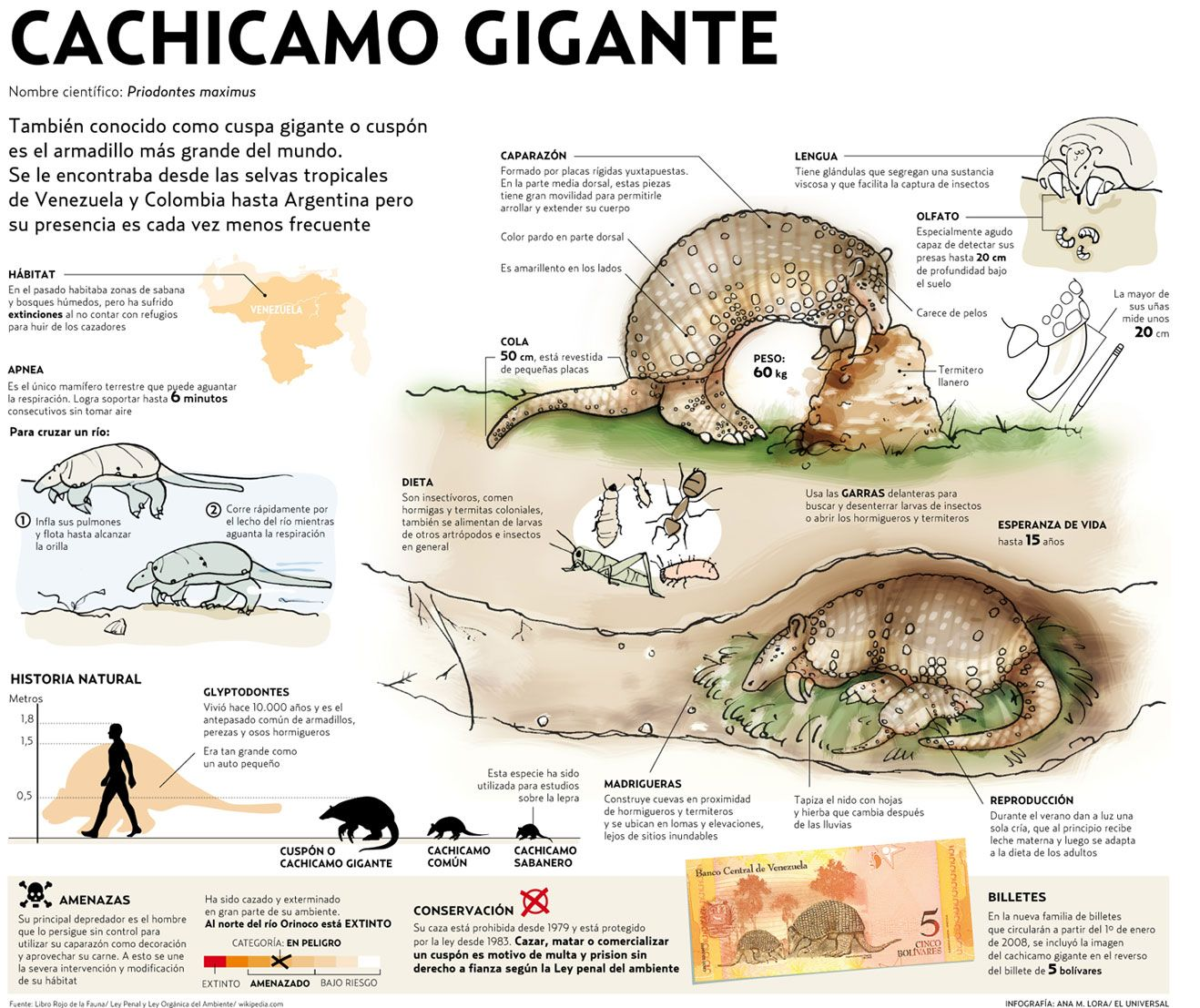 fauna venezolana en peligro de extincion - Buscar con Google ...