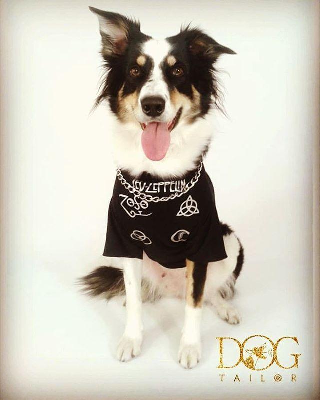 Novas reproduções de modelos de sucesso! Led Zeppelin #rock #classicosdorock #rocknroll #ledzeppelin #led #dog #dogtailor #dogrock #cachorro #cachorroétudodebom #cachorroroqueiro #amoranimal #amor #moda #modapet #pet #petshop #modarock #rockpracachorro #catdog #animaisdeestimação #cachorro #bordercollie #pandora