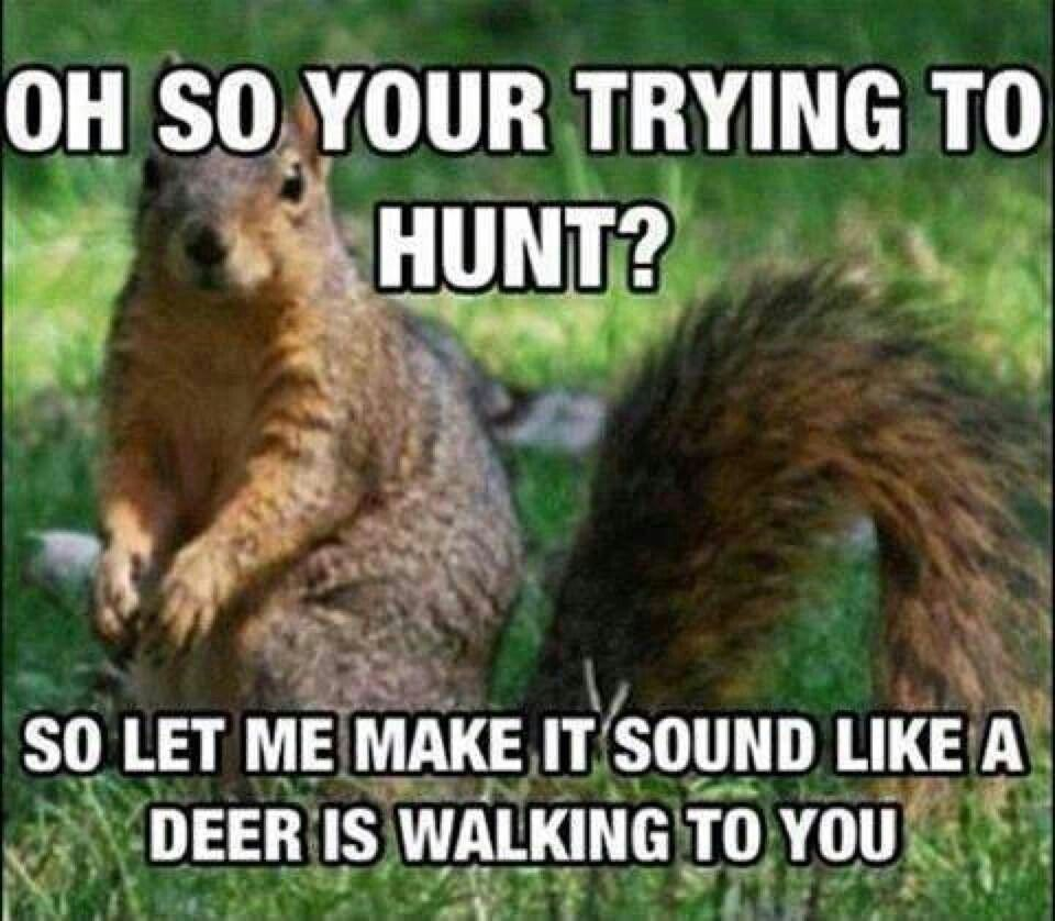Funny Hunting Quotes I Believe They Really Do This Too  Awsome  Pinterest  Funny Pics