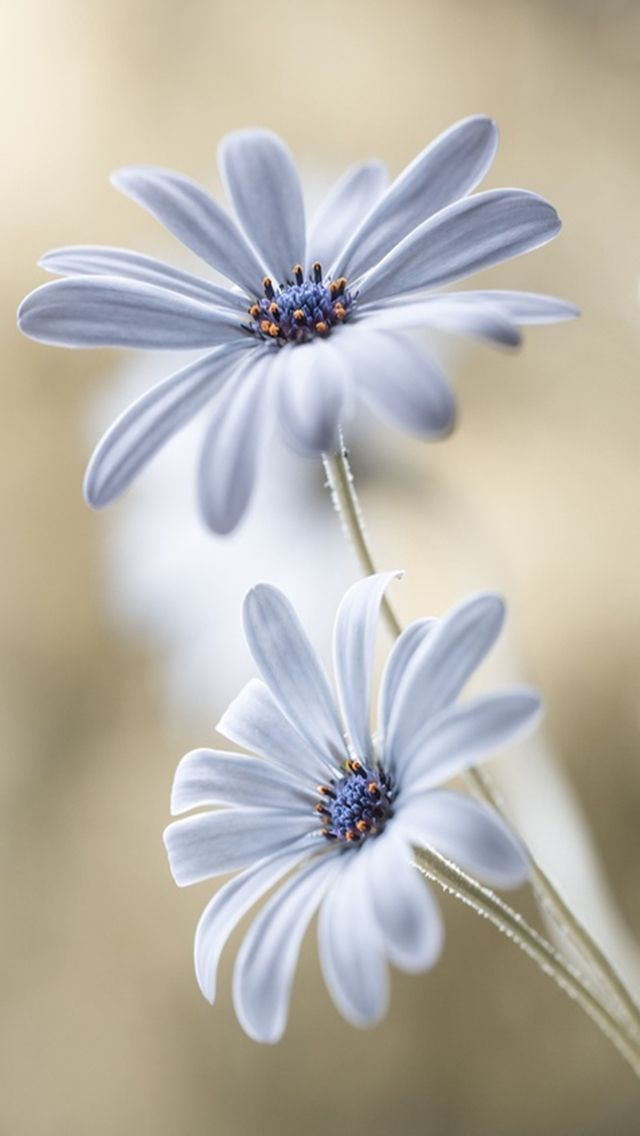 Image result for ornamental flowers and their names image result for ornamental flowers and their names white flowers pretty flowers spring flowers mightylinksfo