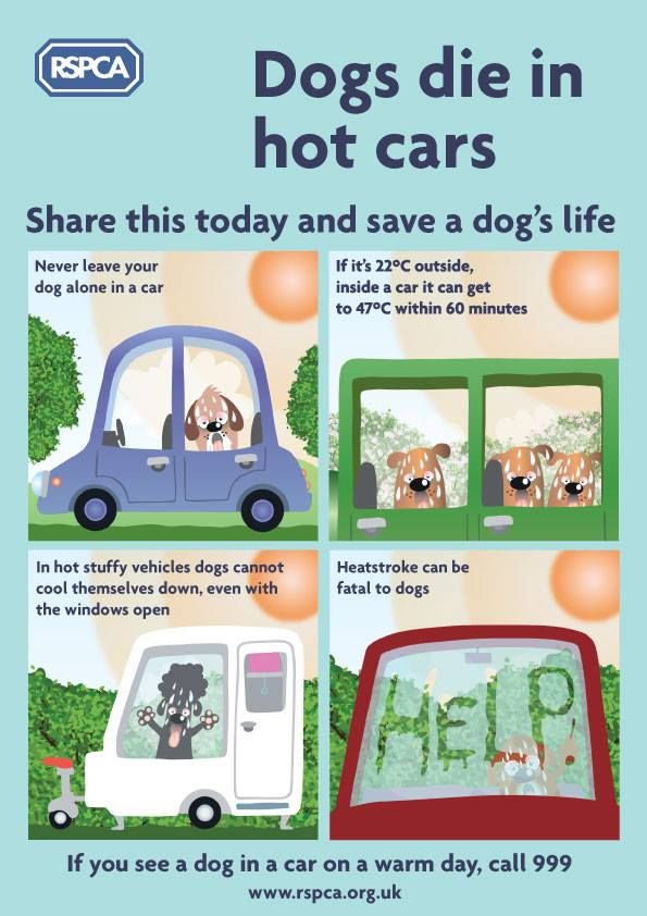 Rspca Dogs Die In Hot Cars Poster Dog Died Dog Infographic Hot Cars