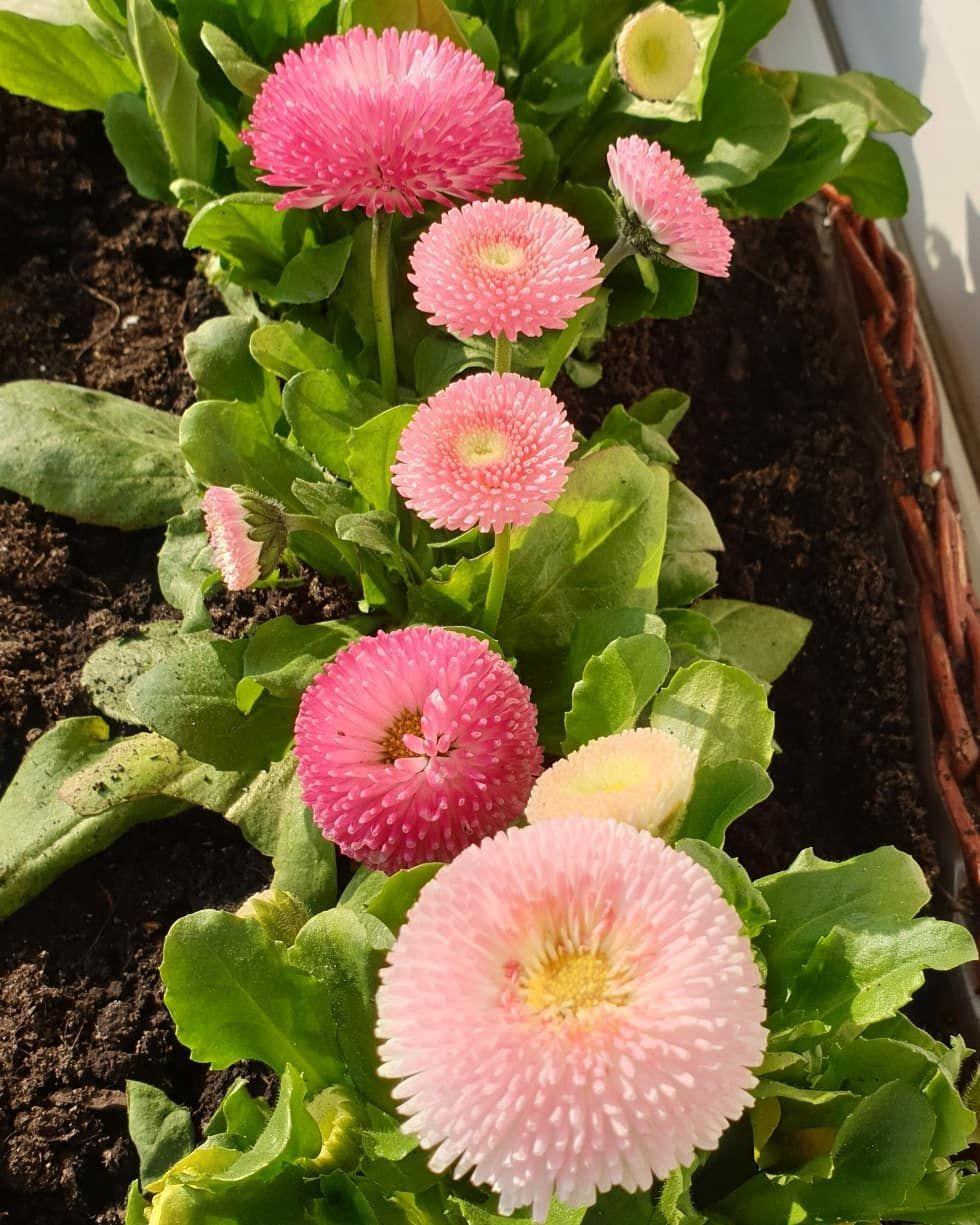 New The 10 Best Home Decor With Pictures W Koncu Mam Kwiatki Na Balkonie Kwiaty Flower Wiosna Zielone Rosliny Pozna Flowers Plants County Wedding