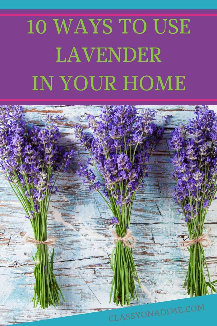 10 Ways To Use Lavender In The Home Lavender Uses Lavender Rosemary Plant