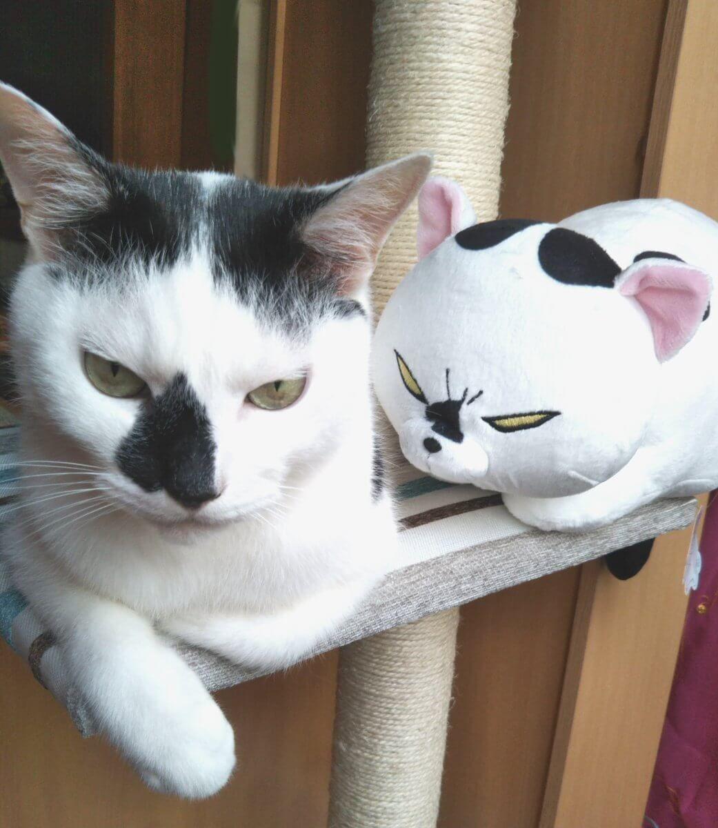 愛犬と愛ネコを人形にしてみた 激似すぎて笑った 笑うメディア クレイジー 犬と猫 猫 子猫