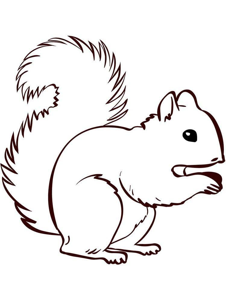 Eichhörnchen Malvorlagen Einfach Eichhörnchen ist ein