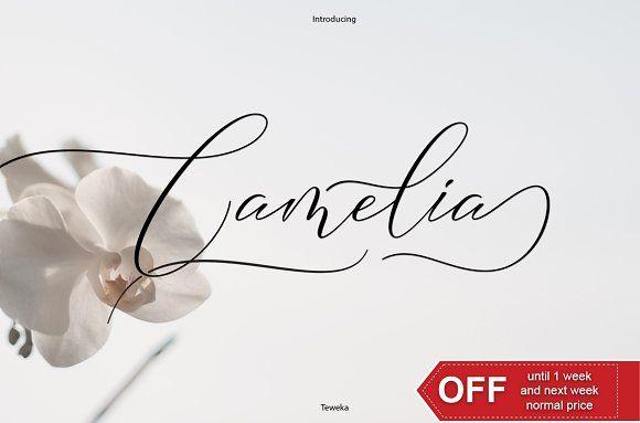camelia calligraphy modern  creativework247