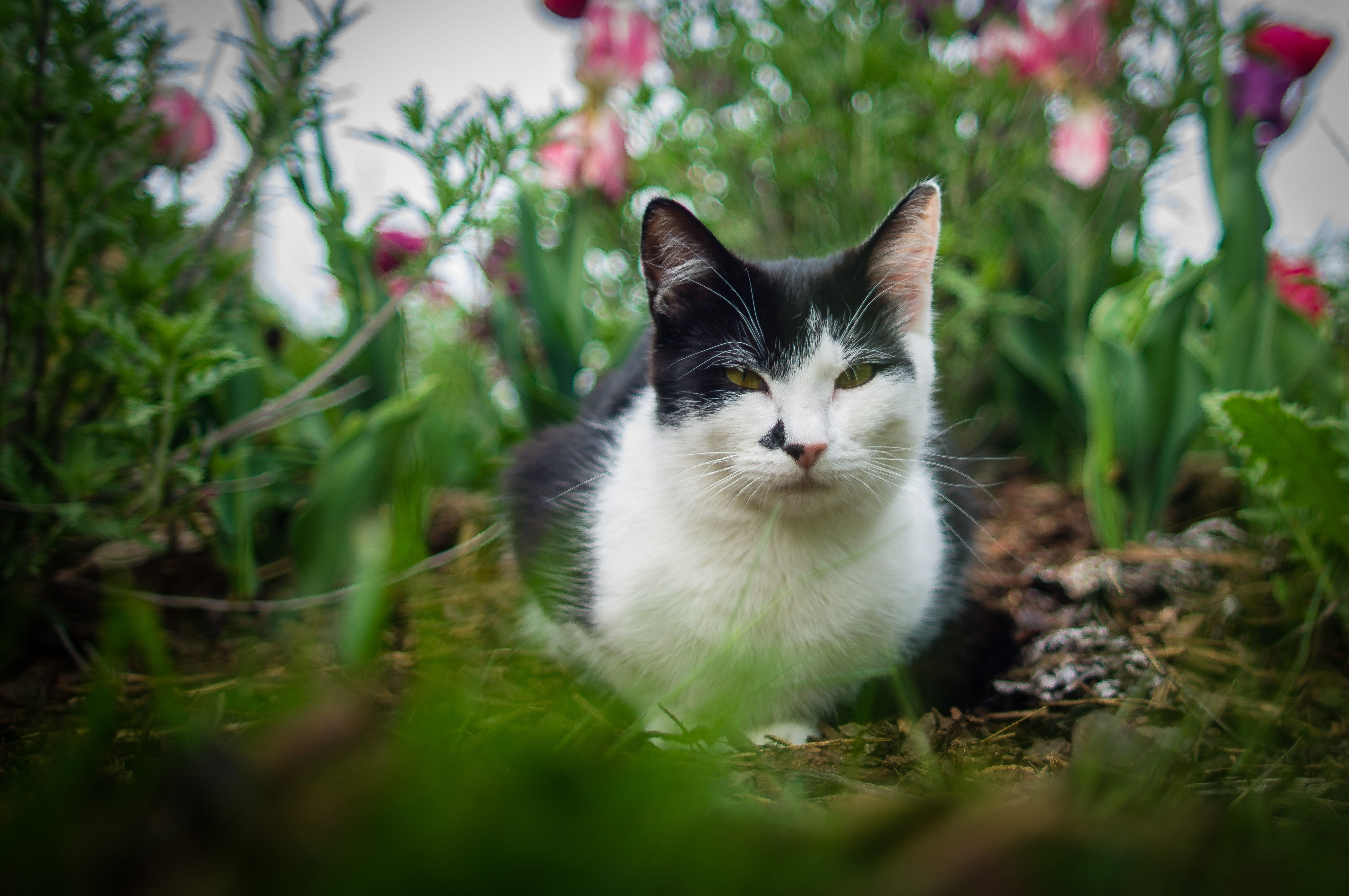 10 Ways to Keep Cats Out of Your Yard or Garden Cat