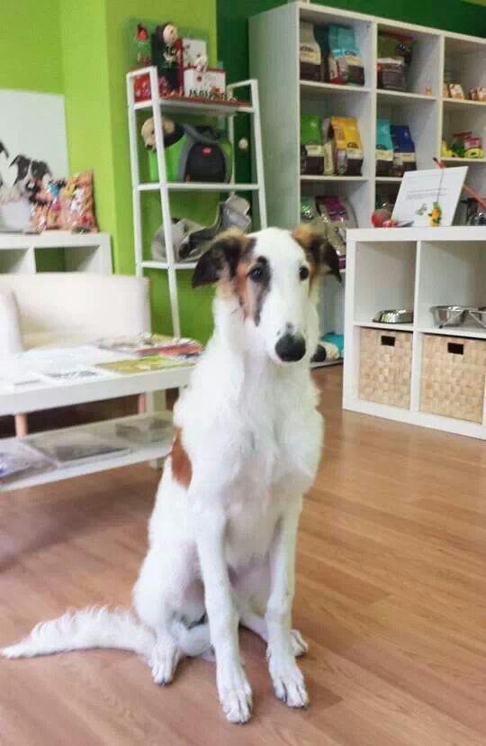 Peluquería canina Los amigos de Lola. Gijón (Asturias)