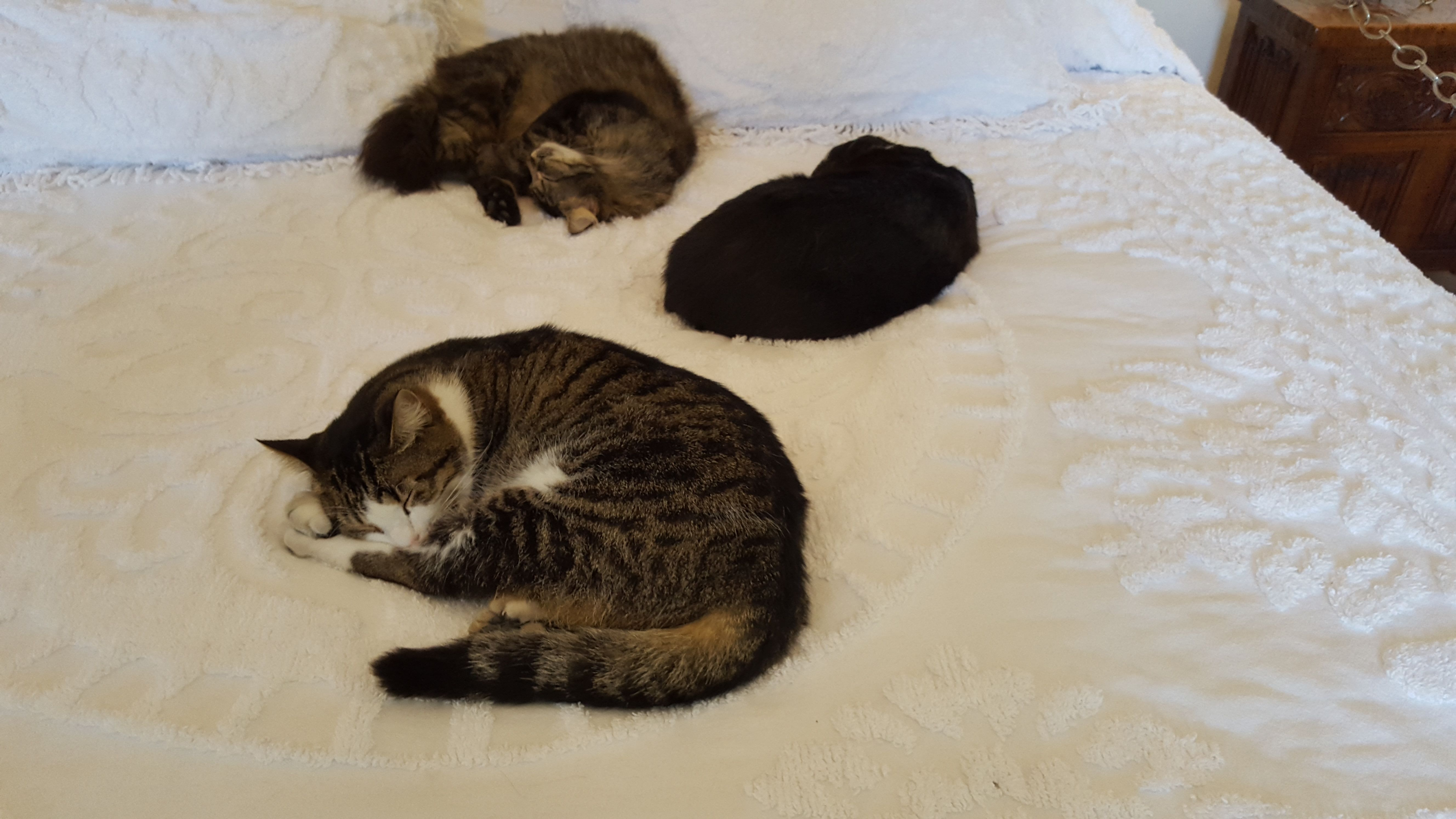 Ernest Hemingway House cats (xpost from r/cats)