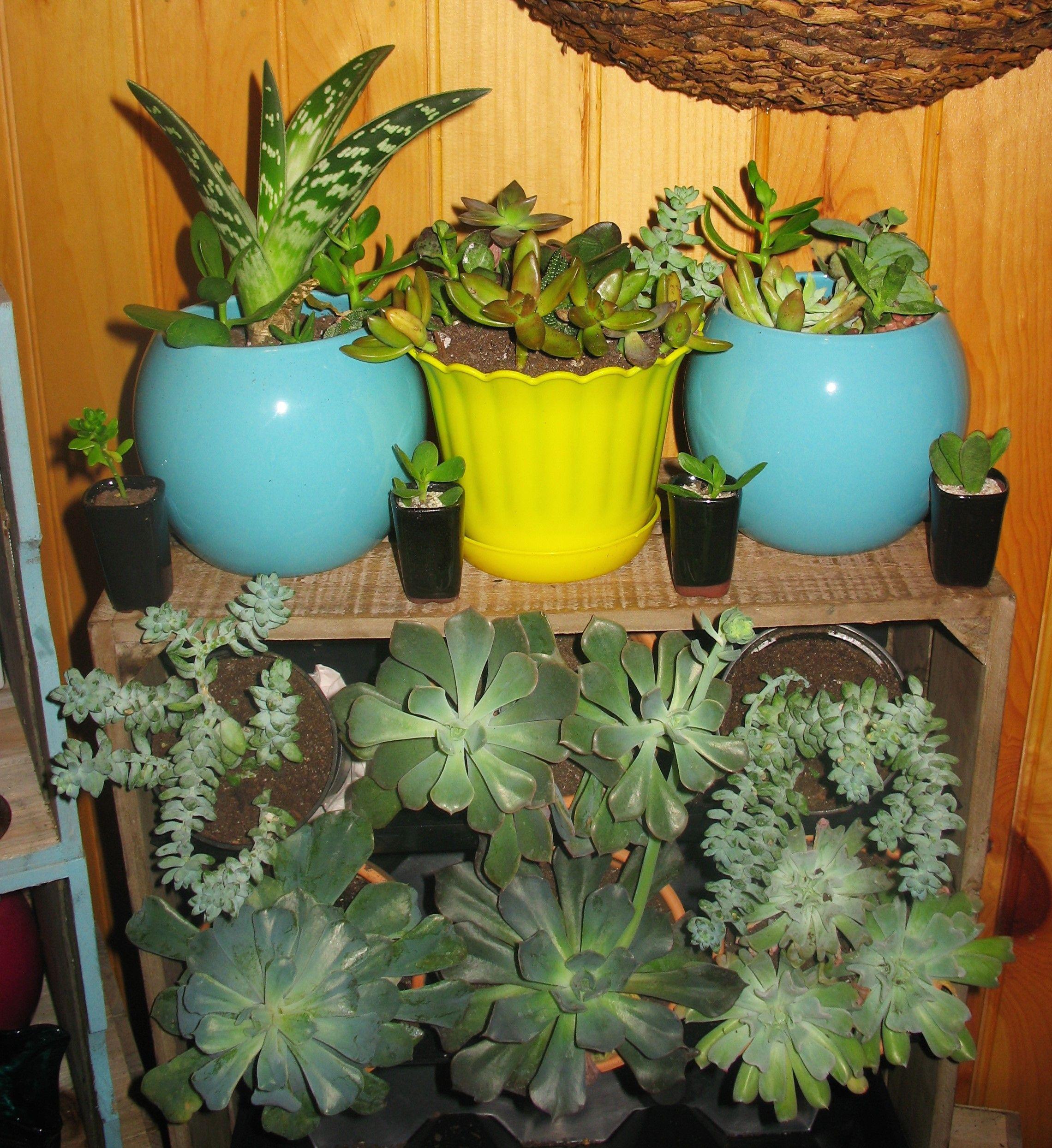 Indoor Succulent Garden Succulent Garden Indoor Succulents