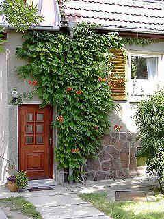 Klettertrompete Trompetenwinde Trompetenblume Beispiele Und Fotos Klettertrompete Trompetenblume Kletterpflanzen