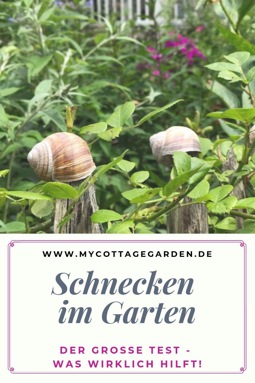 Schnecken Was Hilft Schnecken Im Garten Garten Gartentipps