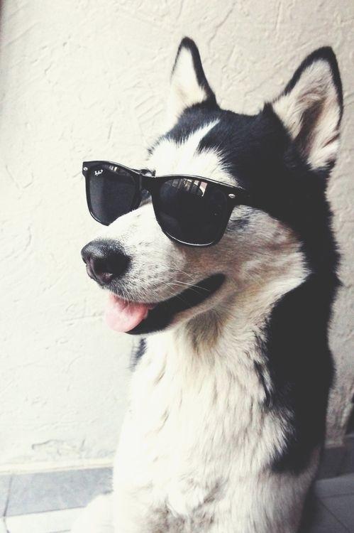 Pinterest Beccaadownss Cute Animals Puppies Pup