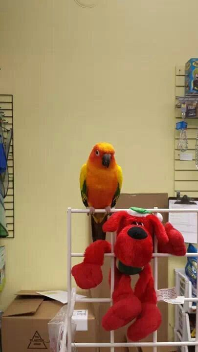 Skittles My Sun Conure Animals Pinterest Conure Bird Feathers