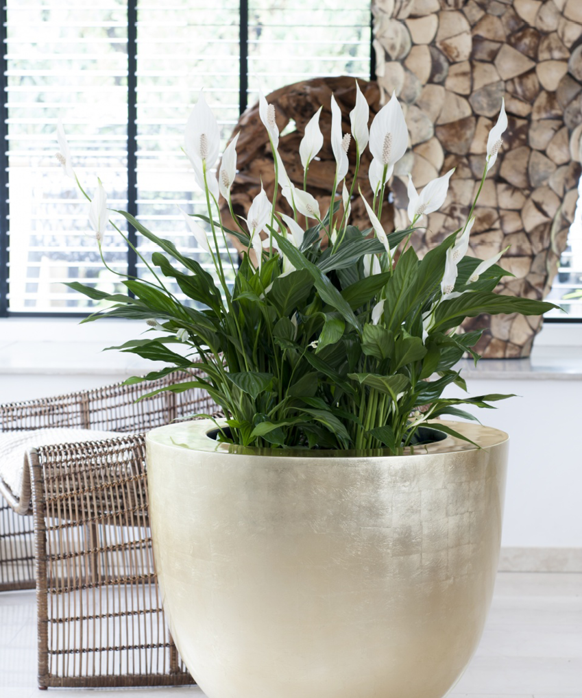 Salle De Bain Minerale ~ Fleurs Ou Plantes Vertes Quelle Plante Choisir Et Pour Quelle