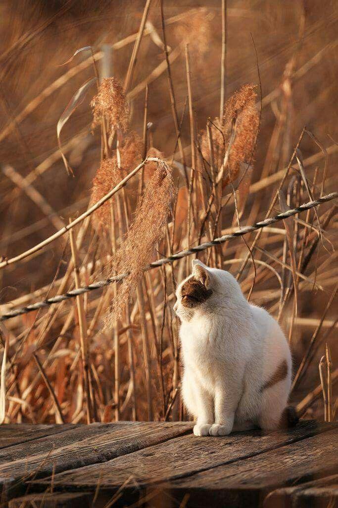 Pin Von Anna Stein Auf Katzen Seltsame Katzen Ausgestopftes Tier Hubsche Katzen
