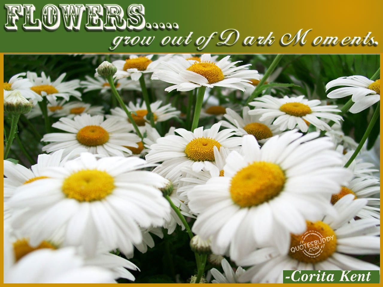 Flowers quotes and images flowers quotes graphics flower quotes flowers quotes and images flowers quotes graphics izmirmasajfo