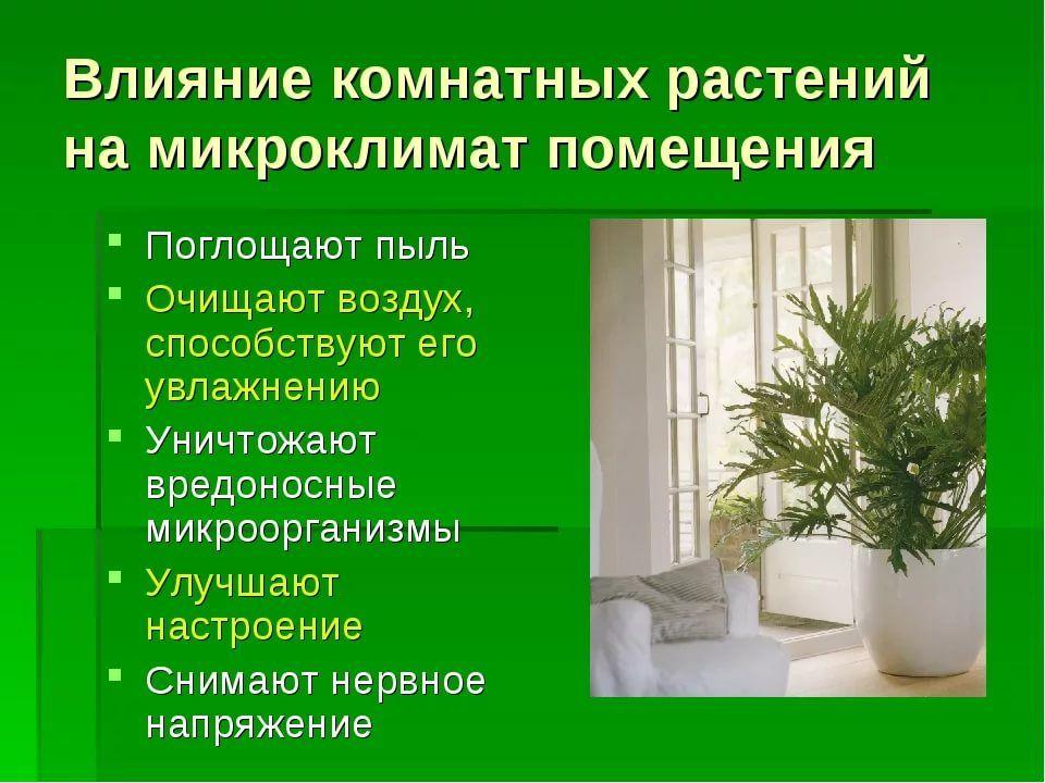 как влияет на жизнь человека и значение растение пеперомия на жен. и муж.: 6 тыс изображений найдено в Яндекс.Картинках | Растения, Цветы