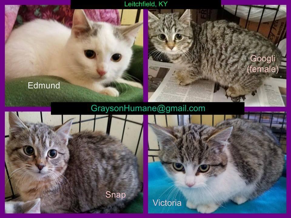 Grayson County Humane Society/ SPCA 8 hrs · Leitchfield