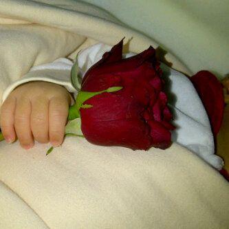 رمزيات بدون حقوق 2015 رمزيات Red Roses Holding Flowers Rose
