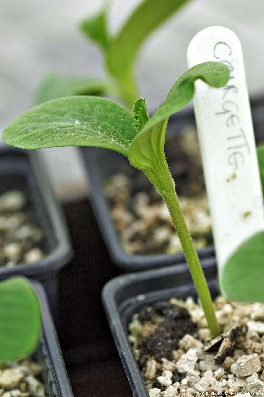 semis nos conseils pour les r ussir coup s r jardinage vegetable garden garden et plants. Black Bedroom Furniture Sets. Home Design Ideas