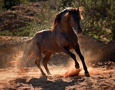 Tony Stromberg Photography's photo.