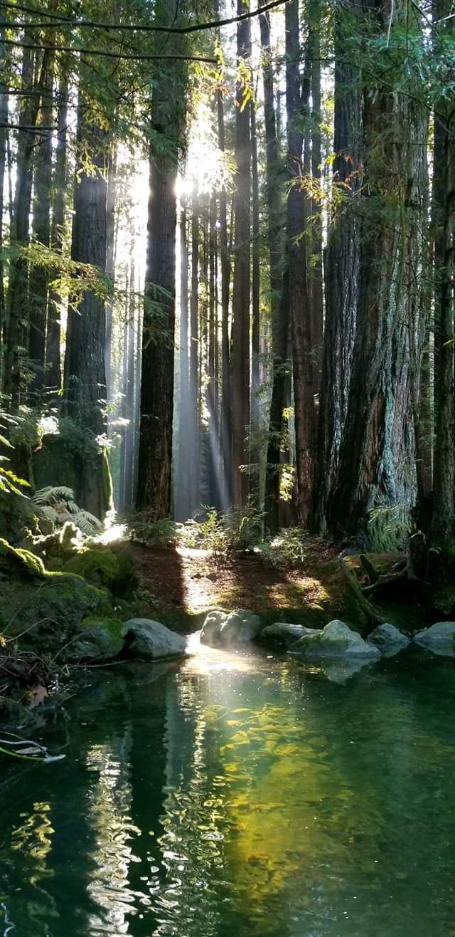 Redwood Forest, California.