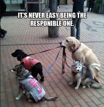 Is Your Dog Walker Walking Your Dog Lustige Tierbilder Hund