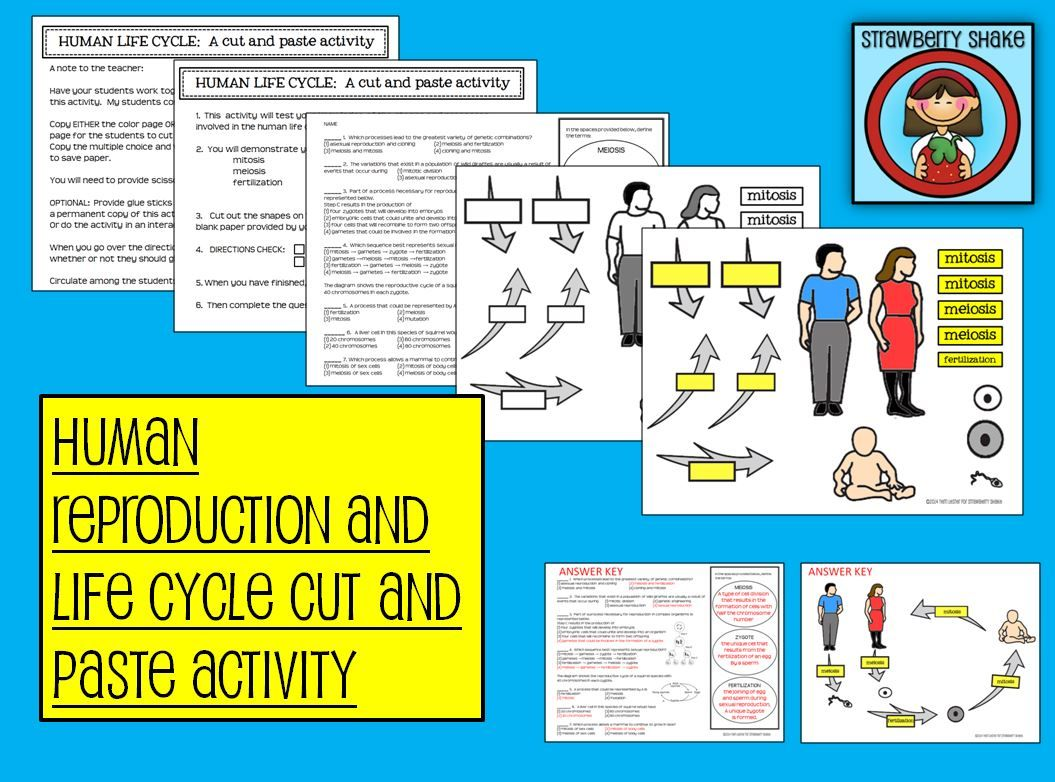 A Human Life Cycle Cut And Paste Activity Mitosis Meiosis Fertilization