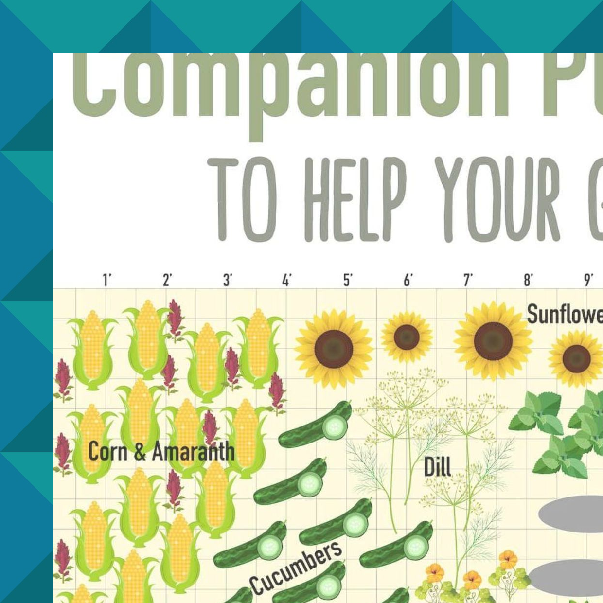 Rhubarb Companion Plants: Find Out Which Fruit And Vegetables Should And Shouldn't
