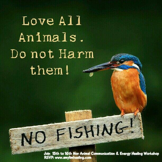 GPS Aucune pêche Kingfisher Vierge Carte de Vœux-Belle Wildlife Photography