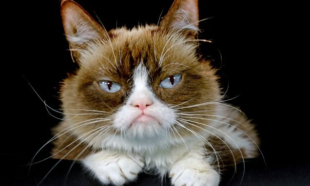 Internet star Grumpy Cat to join a Broadway show _ 'Cats'