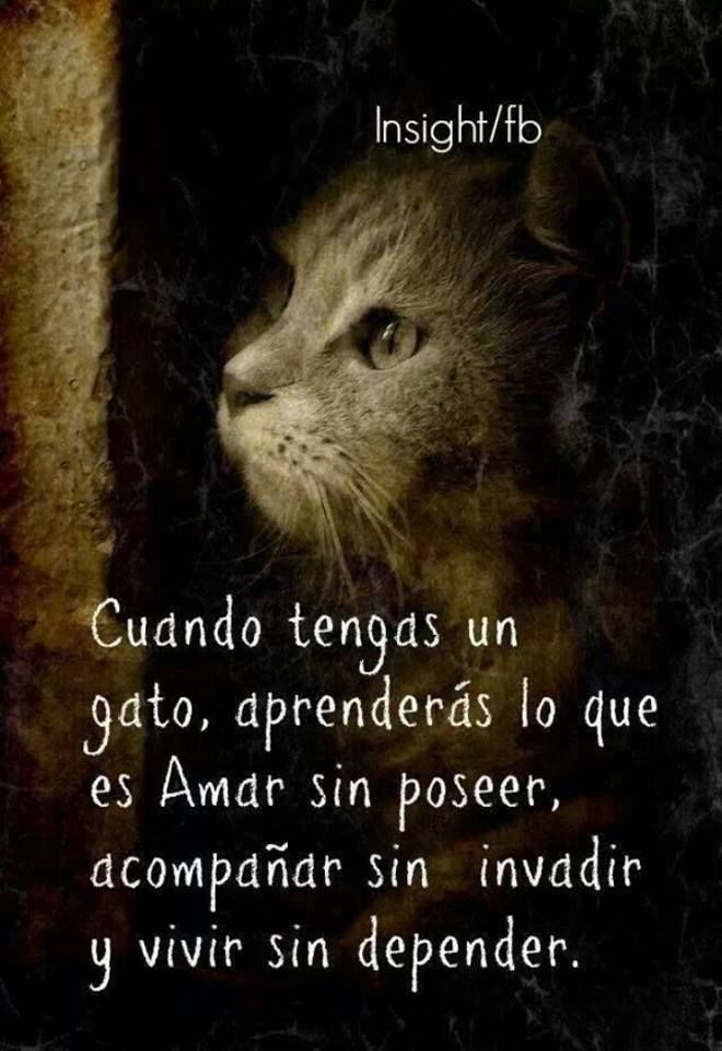 Adoro A Mi Gato Frases Cats Cats Kittens Y Beautiful Cats