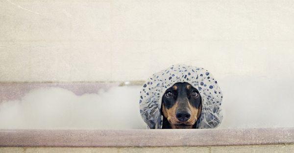 Sabado de manhã é dia de banho. Né bela?
