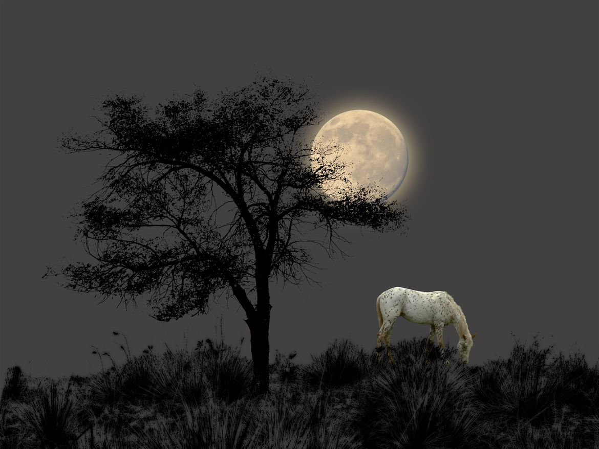 500px / 1398 by peter holme iii