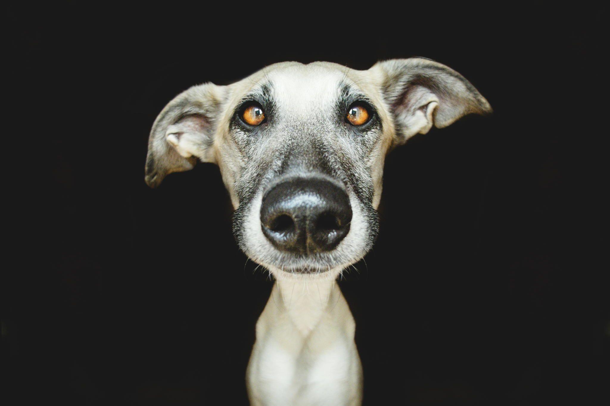 Дню, картинка собака прикол