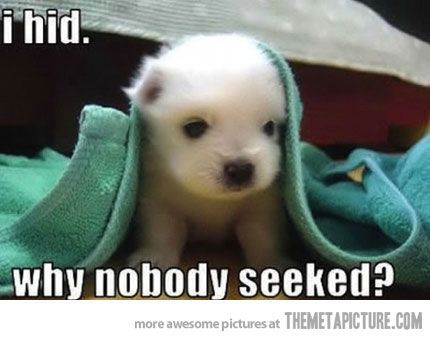 funny puppy hide and seek cute