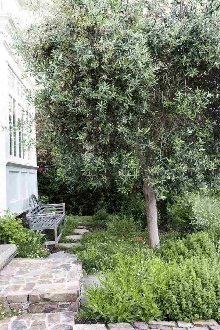Plantes et aménagement jardin méditerranéen – 79 idées