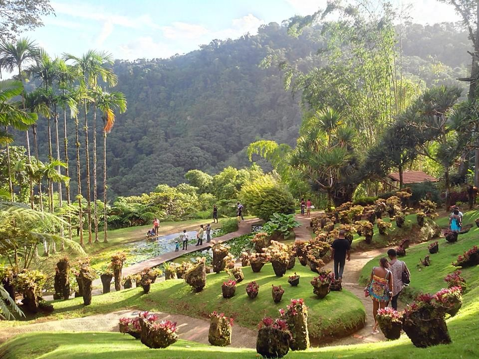 Jardin de balata martinique faune et flore for Jardin balata