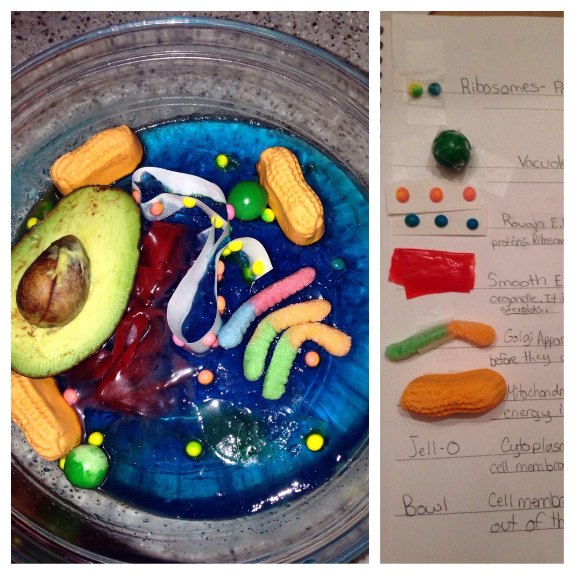 My son's 7th grade edible animal cell project.   Edible ...