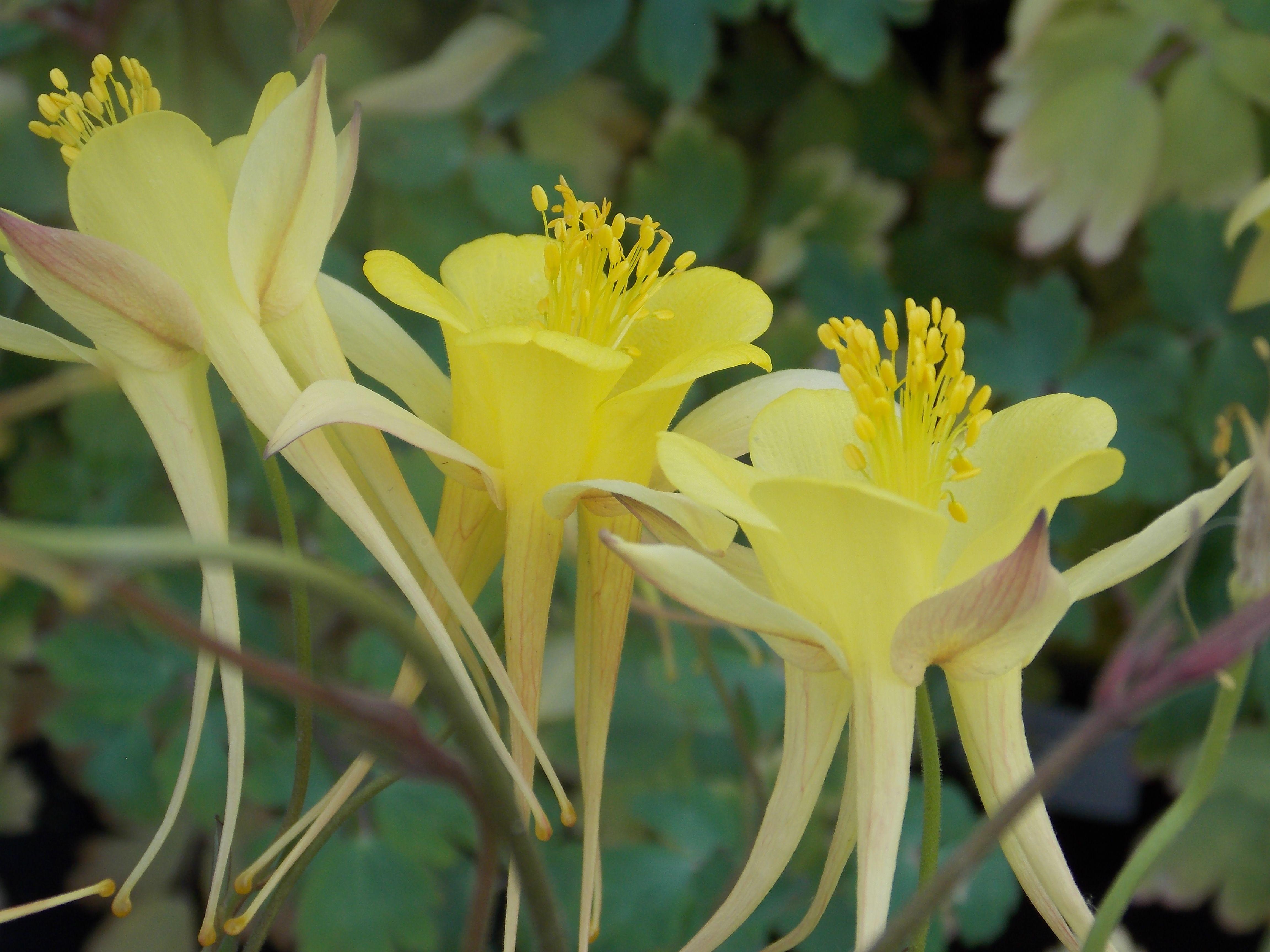 404 Not Found 1 Garden Express Yellow Flowers Flowers