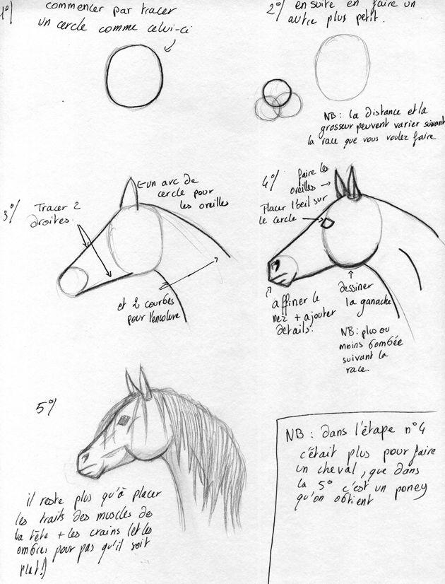 dessin cheval tuto