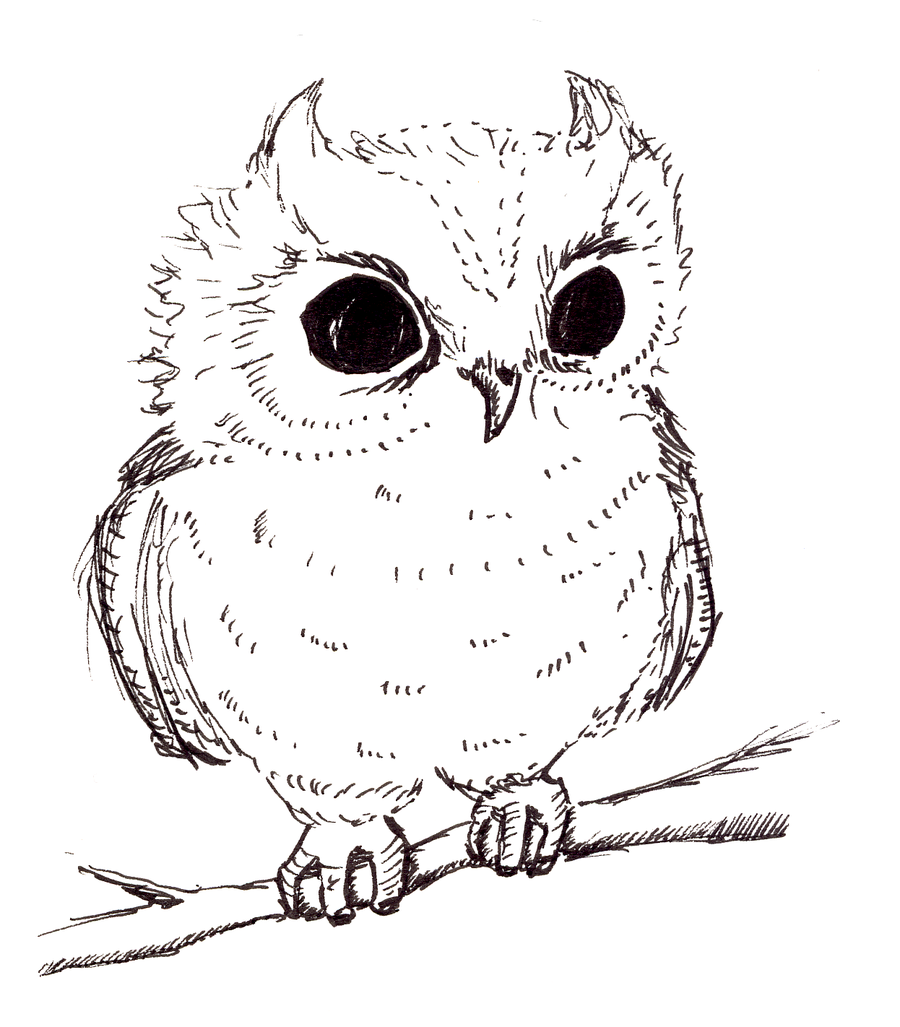 owl drawings baby owl by arani traditional art drawings animals