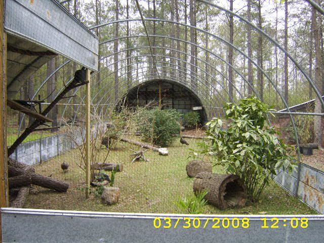 Gbwf Org Forums View Topic Advice Wanted New Aviary