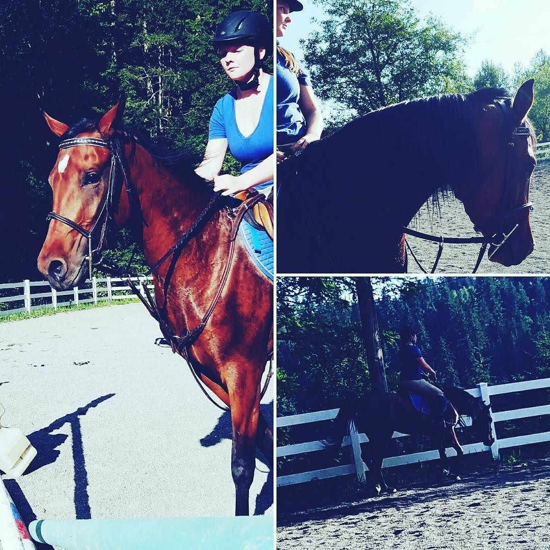 Hanging with Grasshopper  #horse #horses #horseoftheday #horsesofinstagram #instahorse #instagramhorses #instapet #petsofinstagram #petoftheday #instagrampets #equestrian #equestrianlife #horsebackriding #horseriding #horselessons #arab #babyhorse