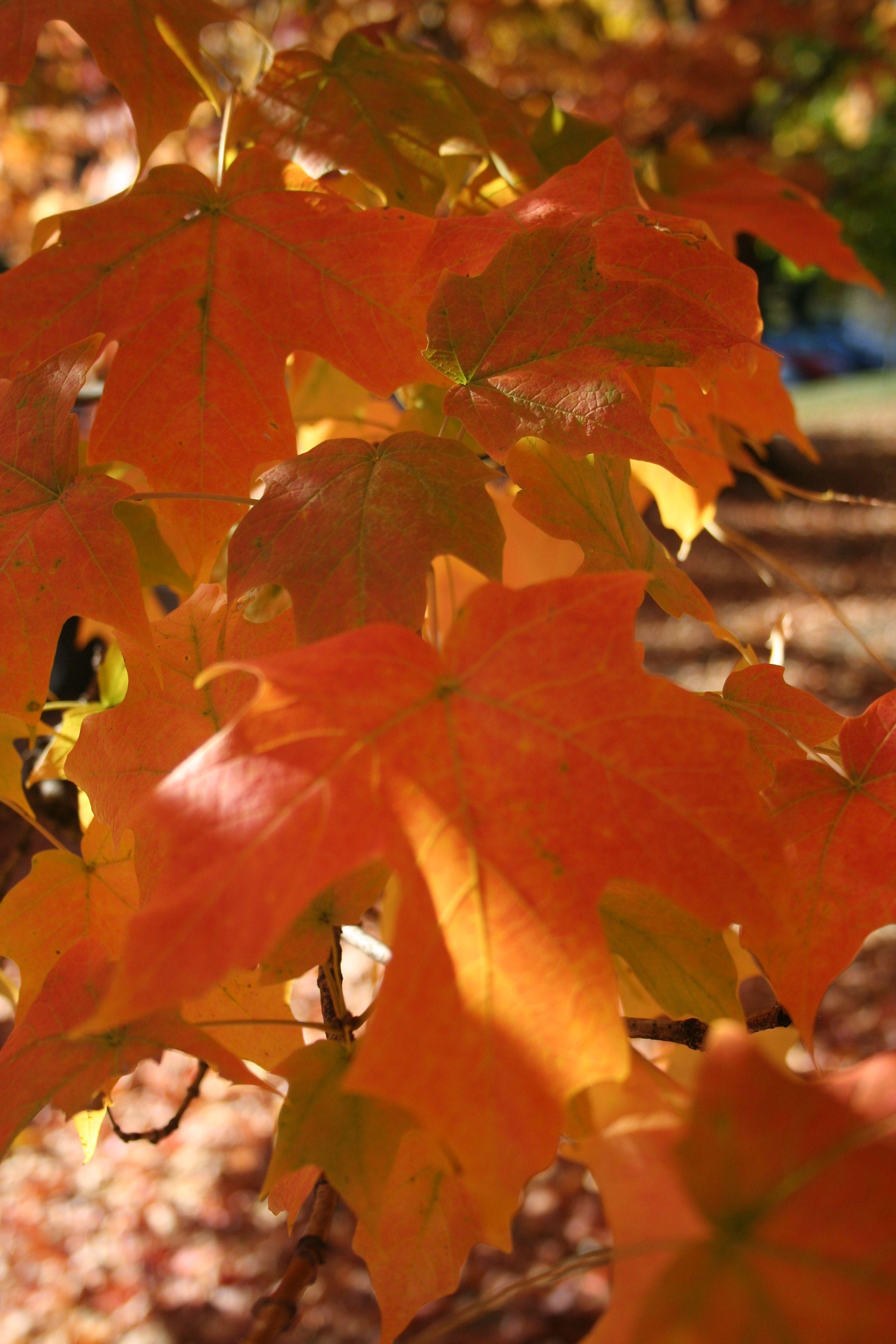 Loose Park, Kansas City; 20 October 2010 Kansas city